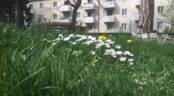 Der Frühling singt sein erstes Lied 2016
